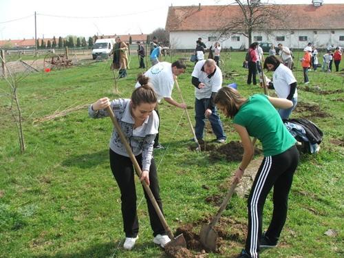 plantare-pomi